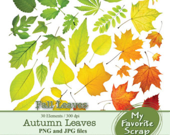 Digital Clipart Maple Leaves and Vine 12 by MyFavoriteScrap.