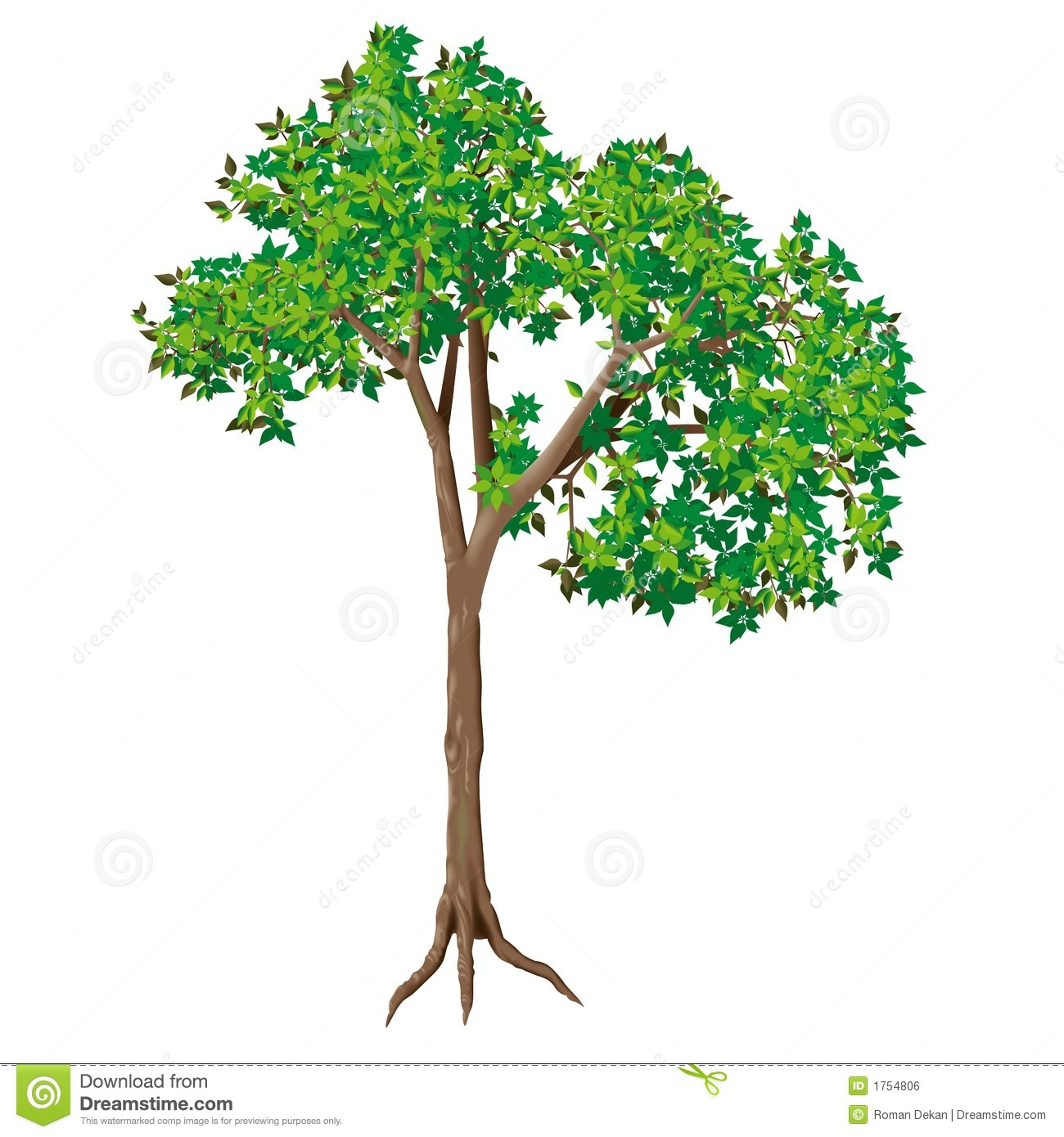 Deciduous Tree Royalty Free Stock Image.