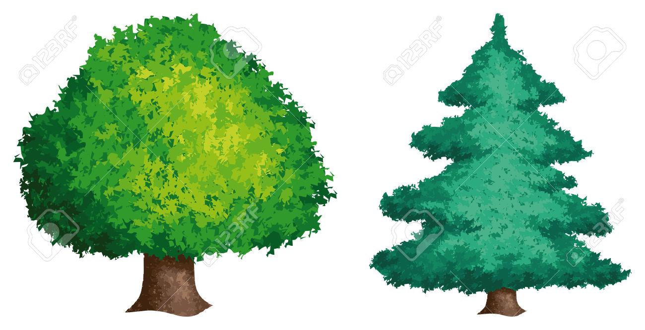 Deciduous tree clipart.