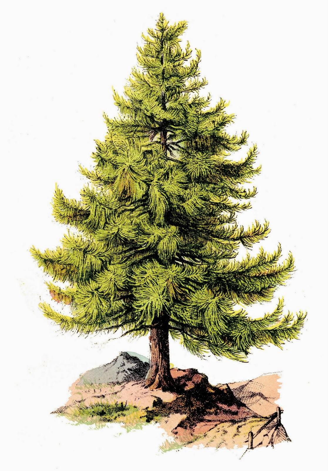 Temperate Deciduous Forest: Primary / Secondary Succession.