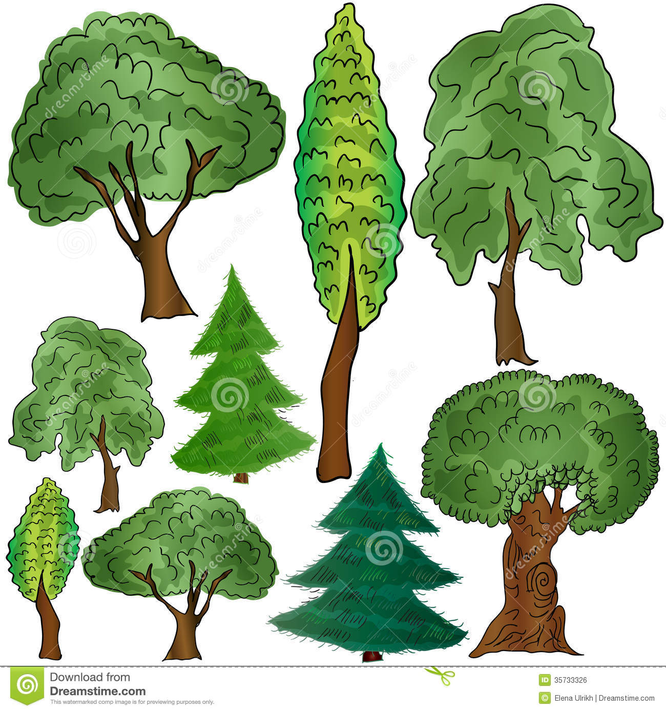 Different Forms Of Deciduous And Coniferous Trees Royalty Free.