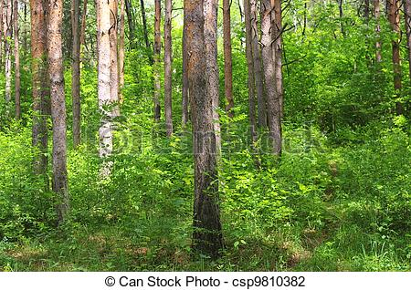 Stock Photo of Mixed forest with deciduous and coniferous trees.