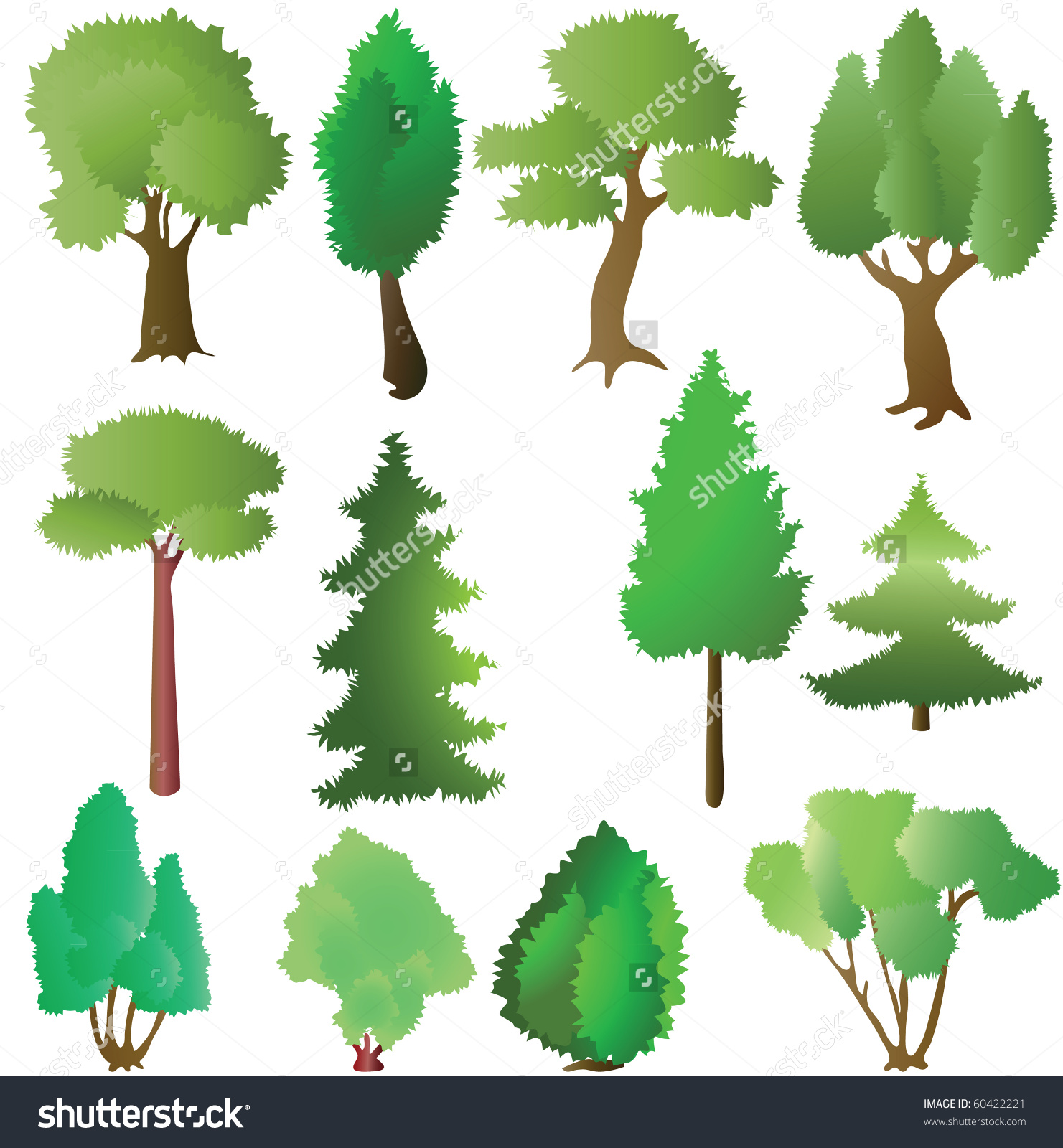 Deciduous And Coniferous Trees In The Summer. Vector Illustration.