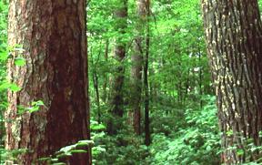 Earth Floor: Biomes.