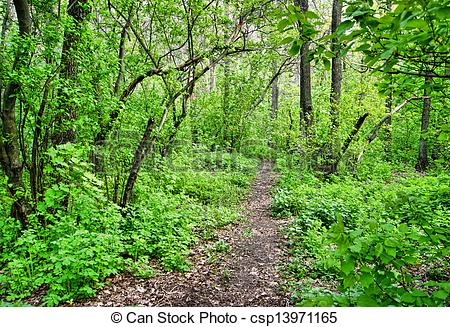 Stock Image of path in the spring deciduous forest csp13971165.