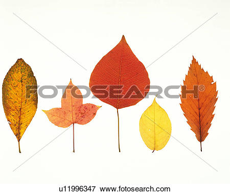 Picture of Five Different Leaves, Each One Different.
