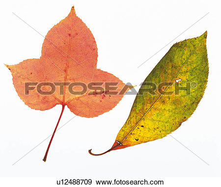 Stock Photograph of Two Different.