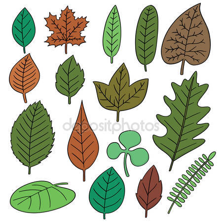 Leaves line Stock Vectors, Royalty Free Leaves line Illustrations.