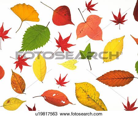 Stock Photo of Several Colorful Leaves Lying on a White Surface.