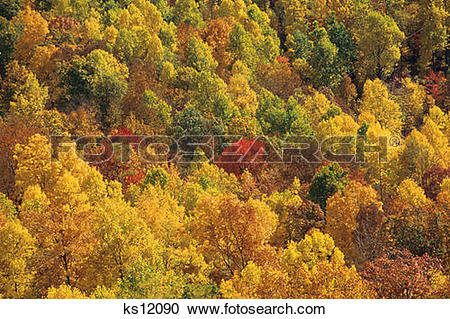 Stock Photography of Calendar Scenics, Autumn, Fall, Forest.
