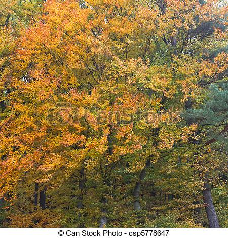 Picture of Golden Deciduous Forest.