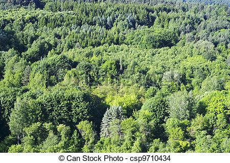Stock Photo of Mixed forest with deciduous and coniferous trees on.
