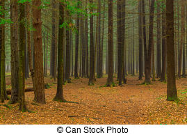 Stock Image of Winter mixed forest of coniferous and deciduous.