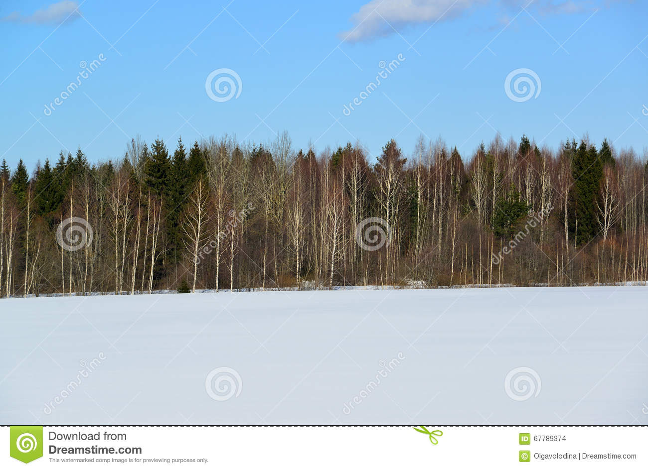 Winter Mixed Forest Of Coniferous And Deciduous Trees Stock Photo.