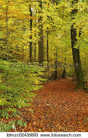 "Stock Photo of ""A trail leading through a colourful mixed forest."