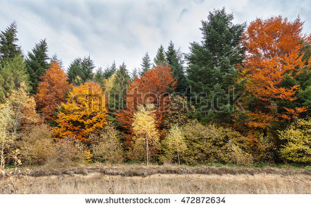 Mixed Deciduous Forest Stock Photos, Royalty.