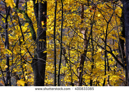 Deciduous Forest Stock Images, Royalty.