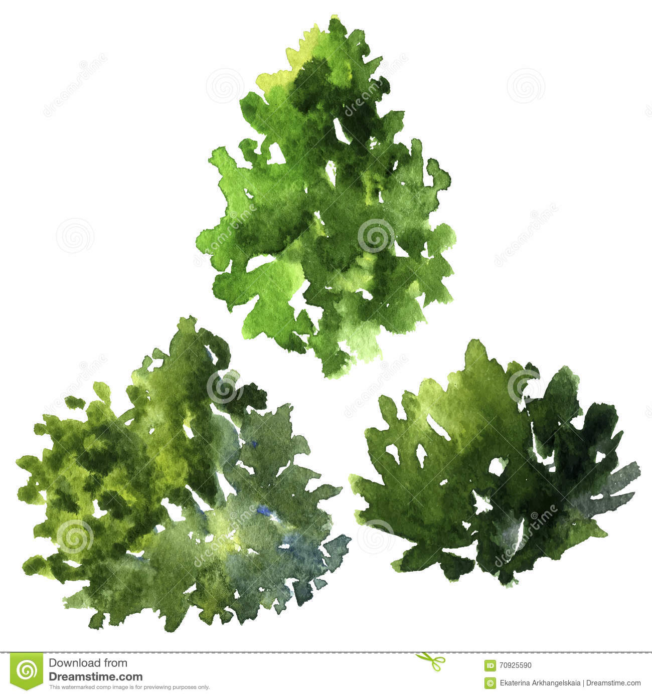 Set Of Different Deciduous Trees Stock Vector.