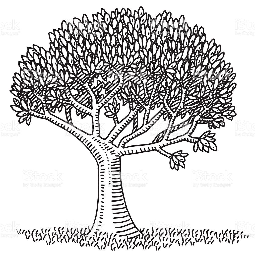 Nature Symbol Deciduous Tree Drawing stock vector art 497708126.