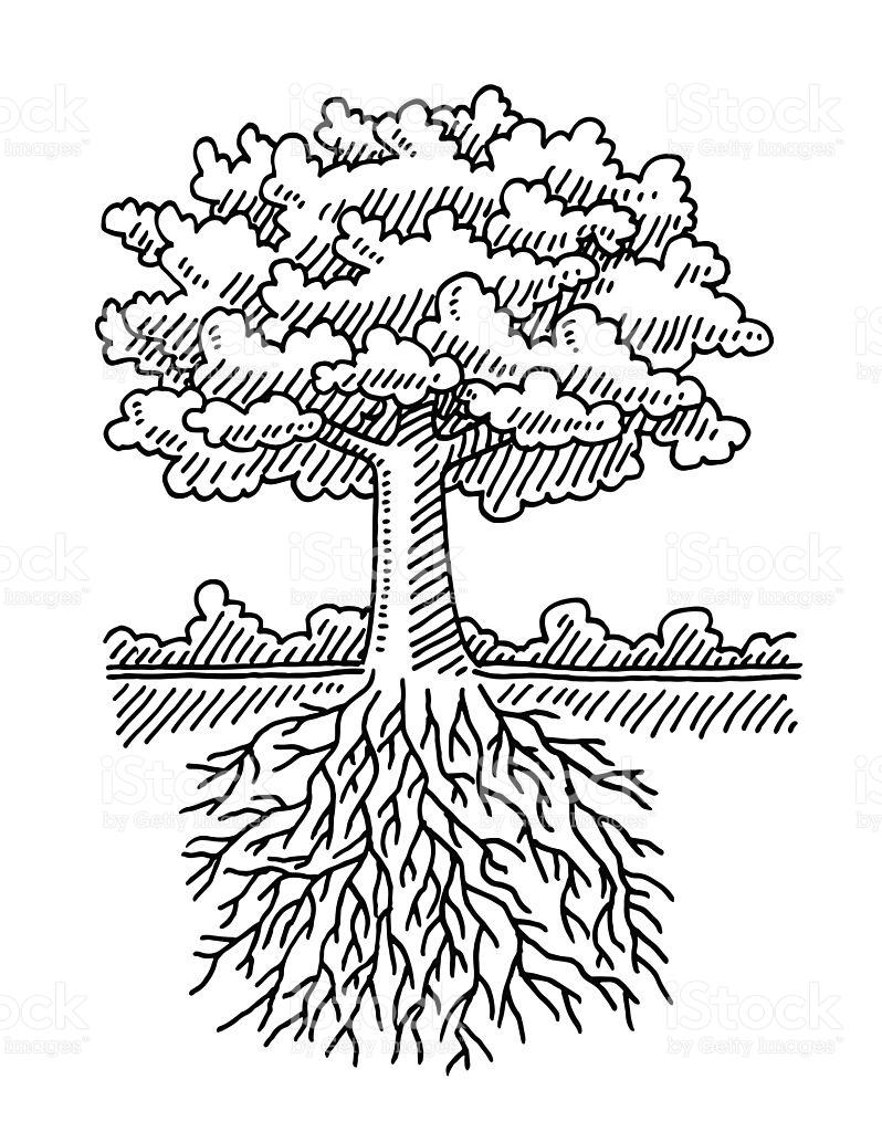Deciduous Tree Root Nature Drawing stock vector art 522020341.