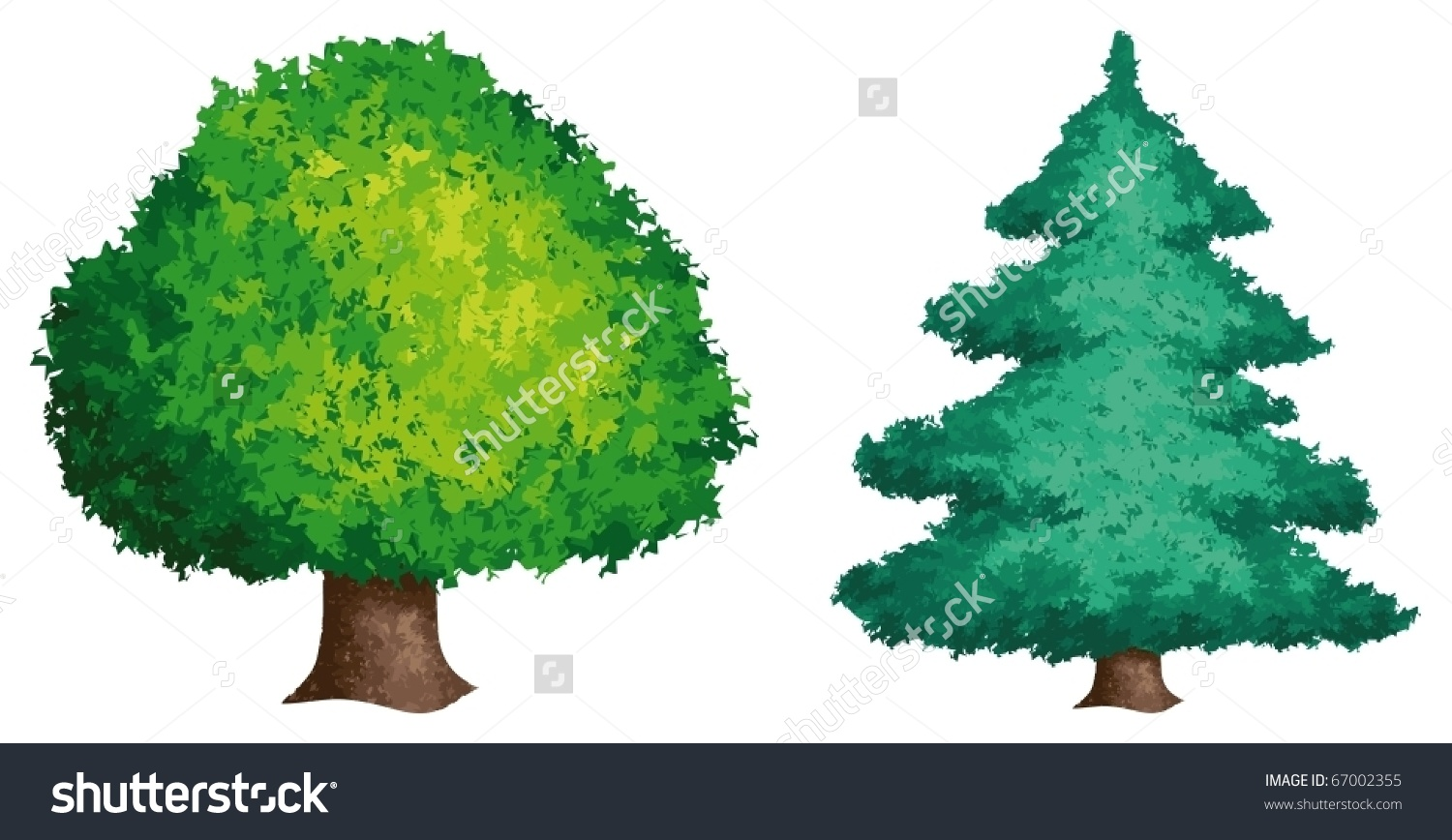 Detailed Image Coniferous Deciduous Tree Stock Vector 67002355.