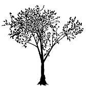 Deciduous Tree Clip Art.