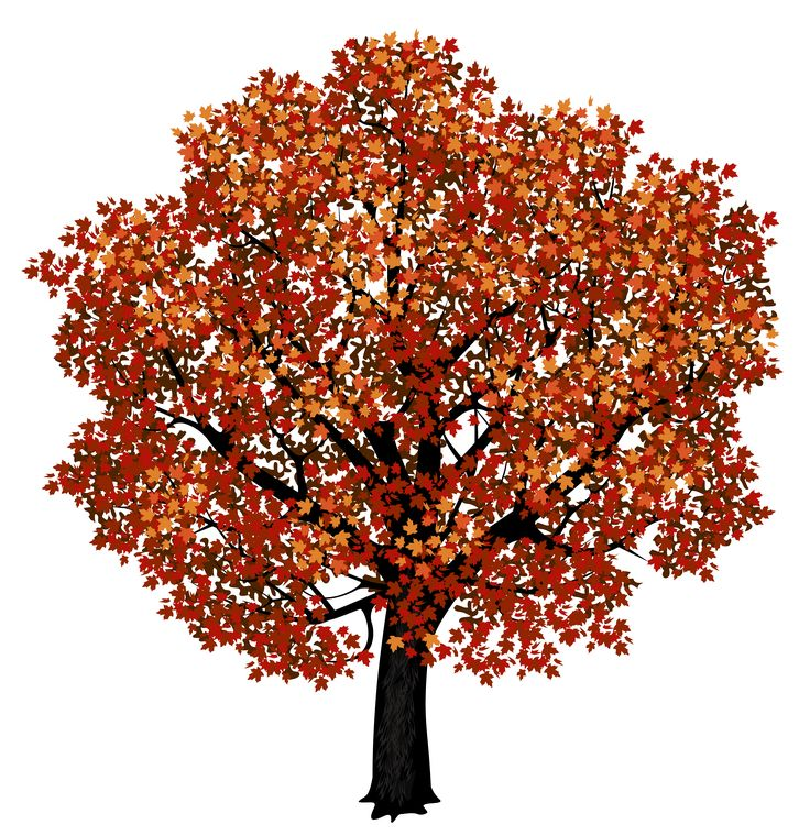 1000+ ideas about Red Maple Tree on Pinterest.