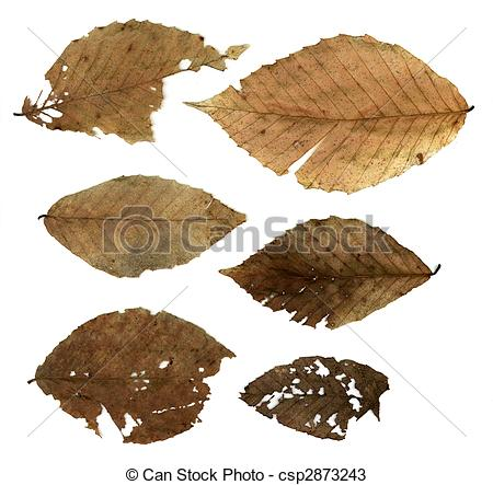 Stock Photos of Decomposing Leaves.