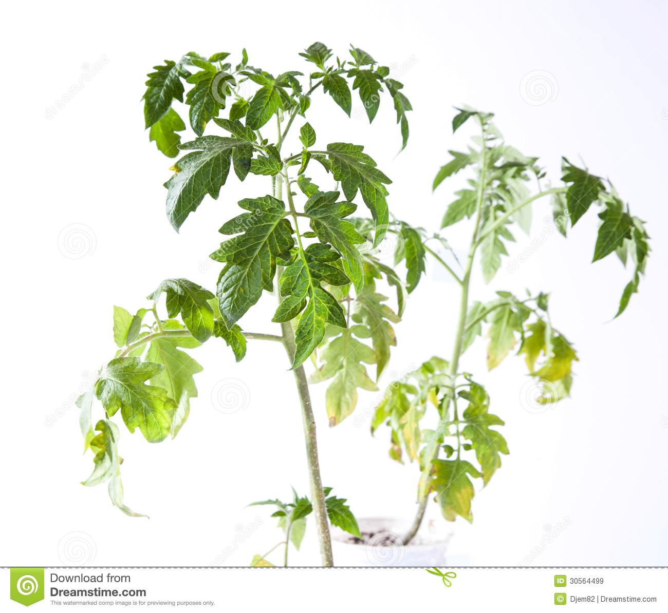Decomposing plant clipart no background.