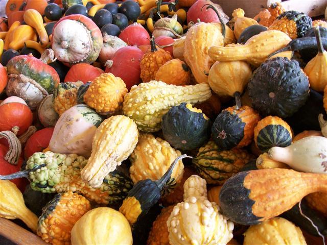 Uncommon Comestibles.