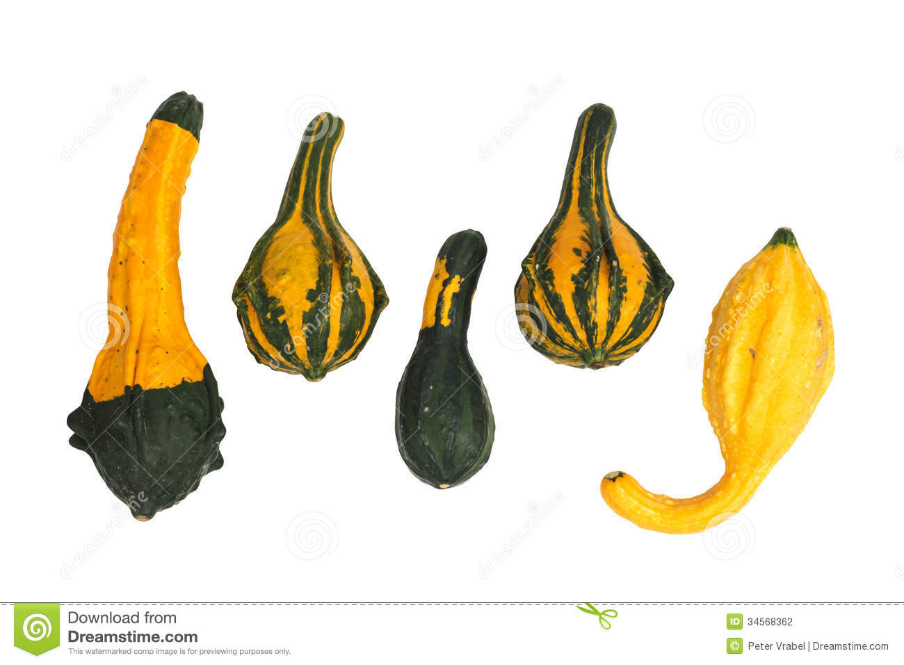 Ornamental Gourds Stock Photos, Images, & Pictures.