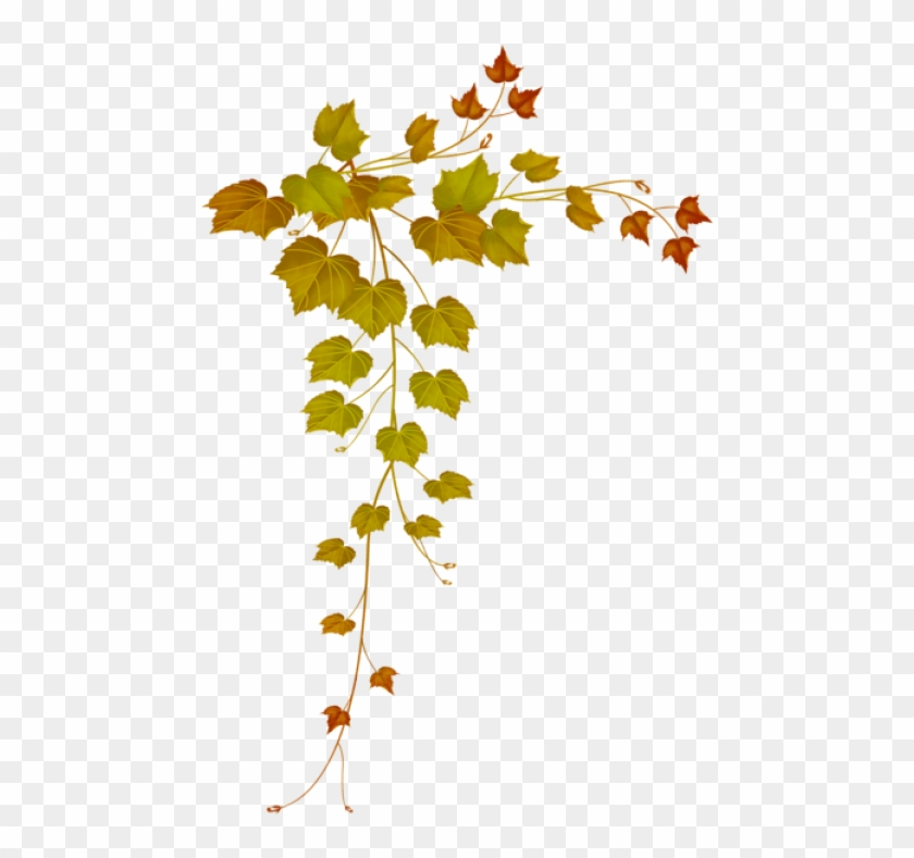 Free Png Download Fall Decorative Leaves Clipart Png.