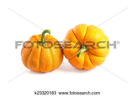 Drawing of Two small decorative pumpkins k23320183.