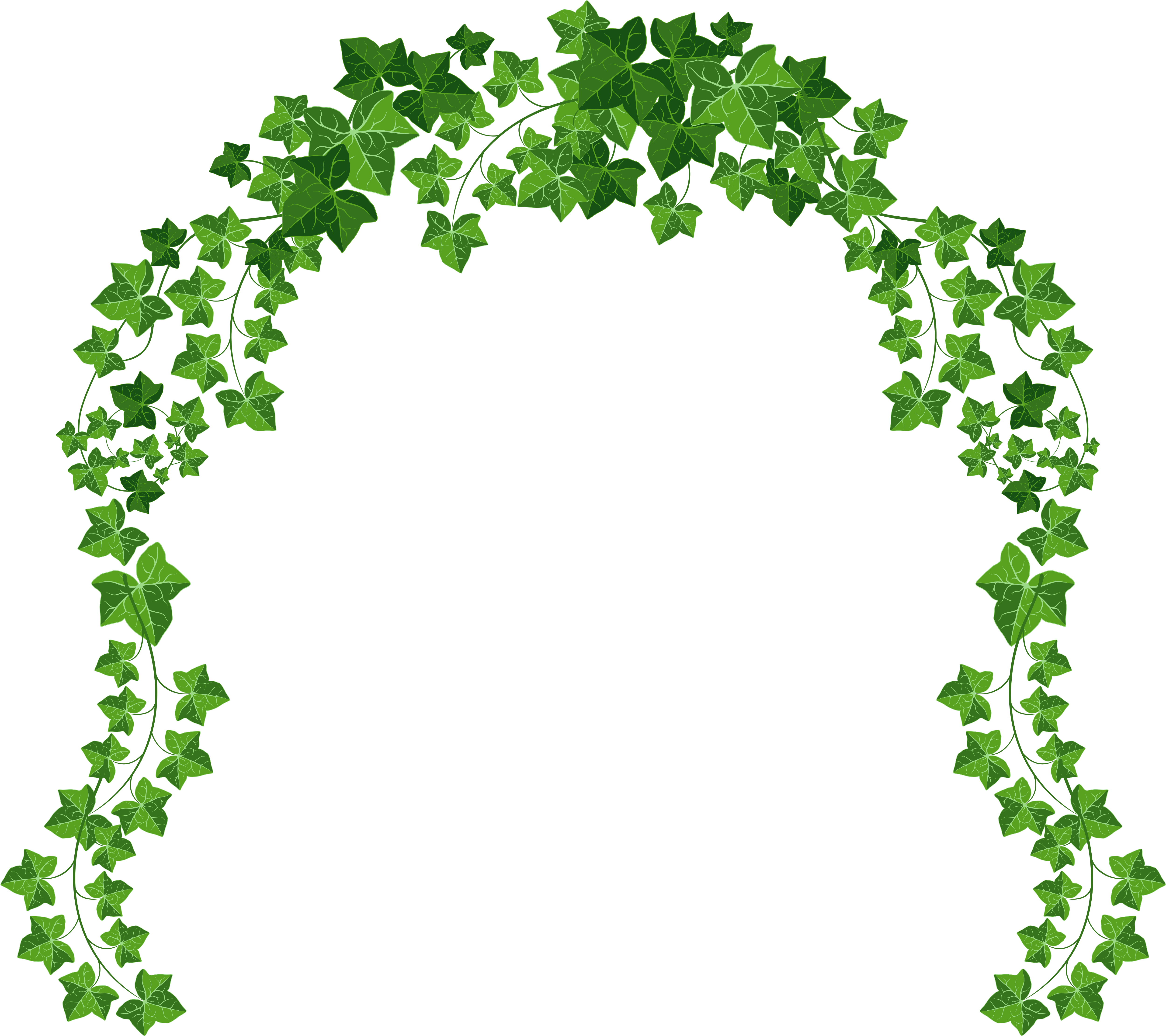 Ivy Clipart Decorative.