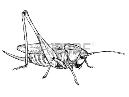 Grasshopper Decticus Verrucivorus Royalty Free Cliparts, Vectors.