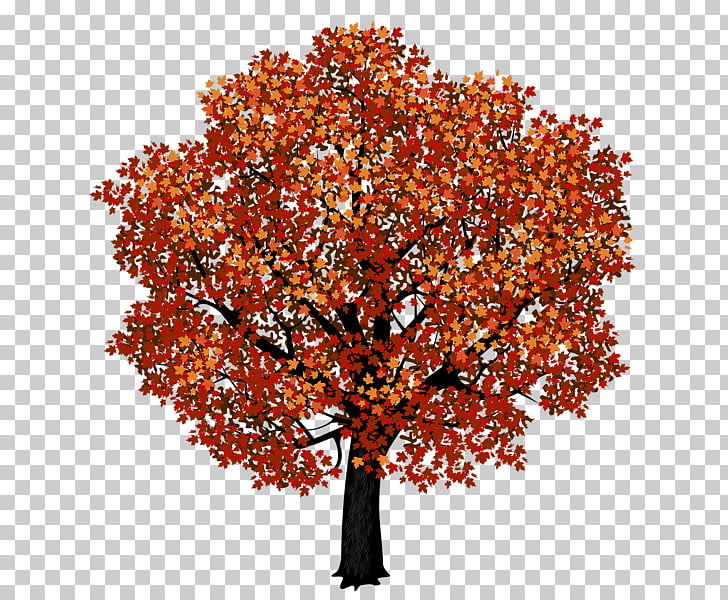 Tree Deciduous Pine , tree PNG clipart.