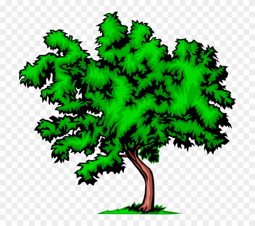 Vector Illustration Of Bushy Deciduous Tree.