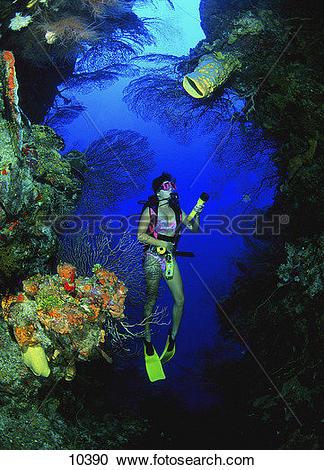 Stock Photography of Scuba diver swimming through deep coral.