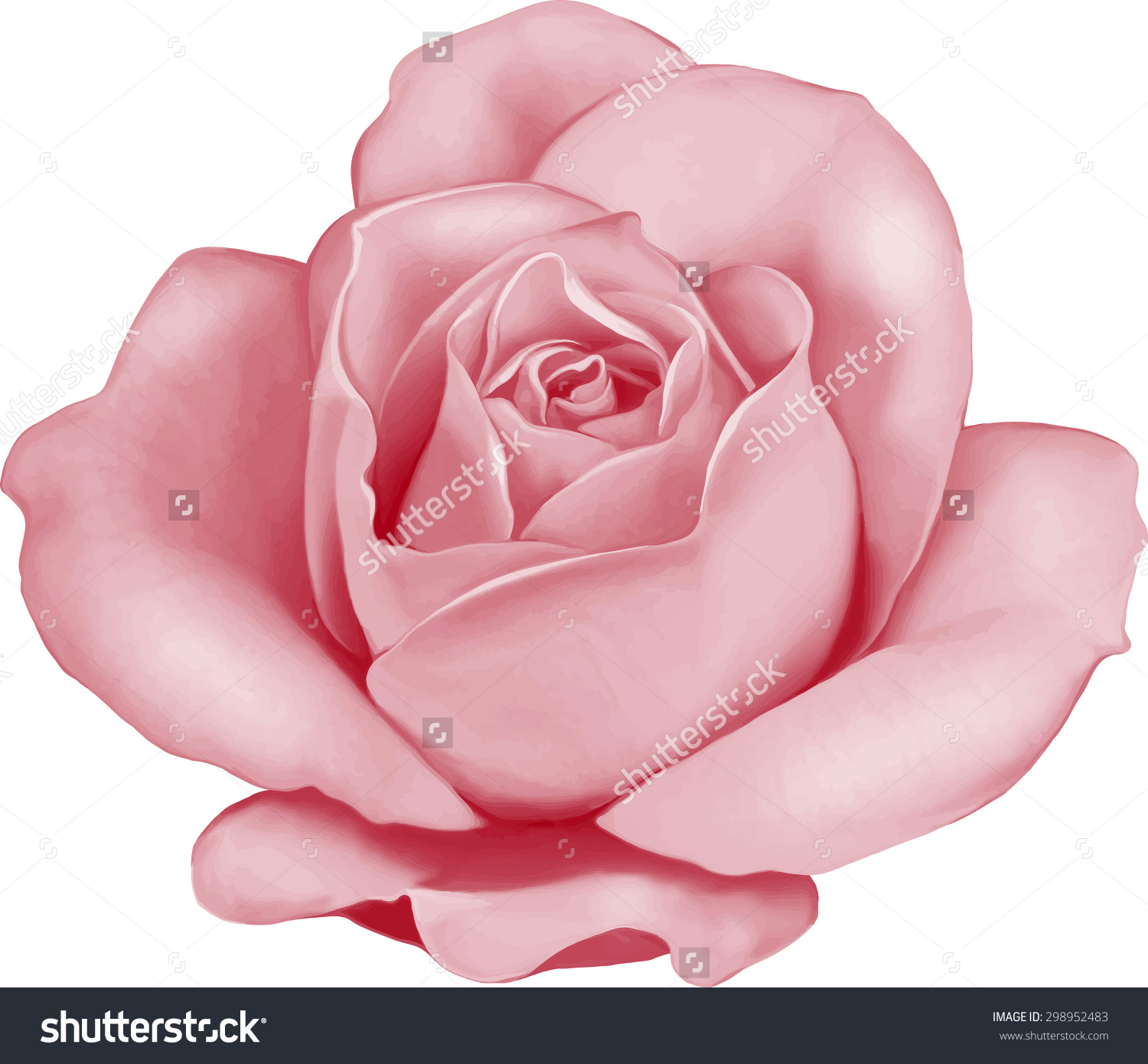 Deep Pink Rose Clipart Clipground