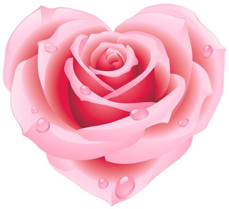 Light pink rose clipart.