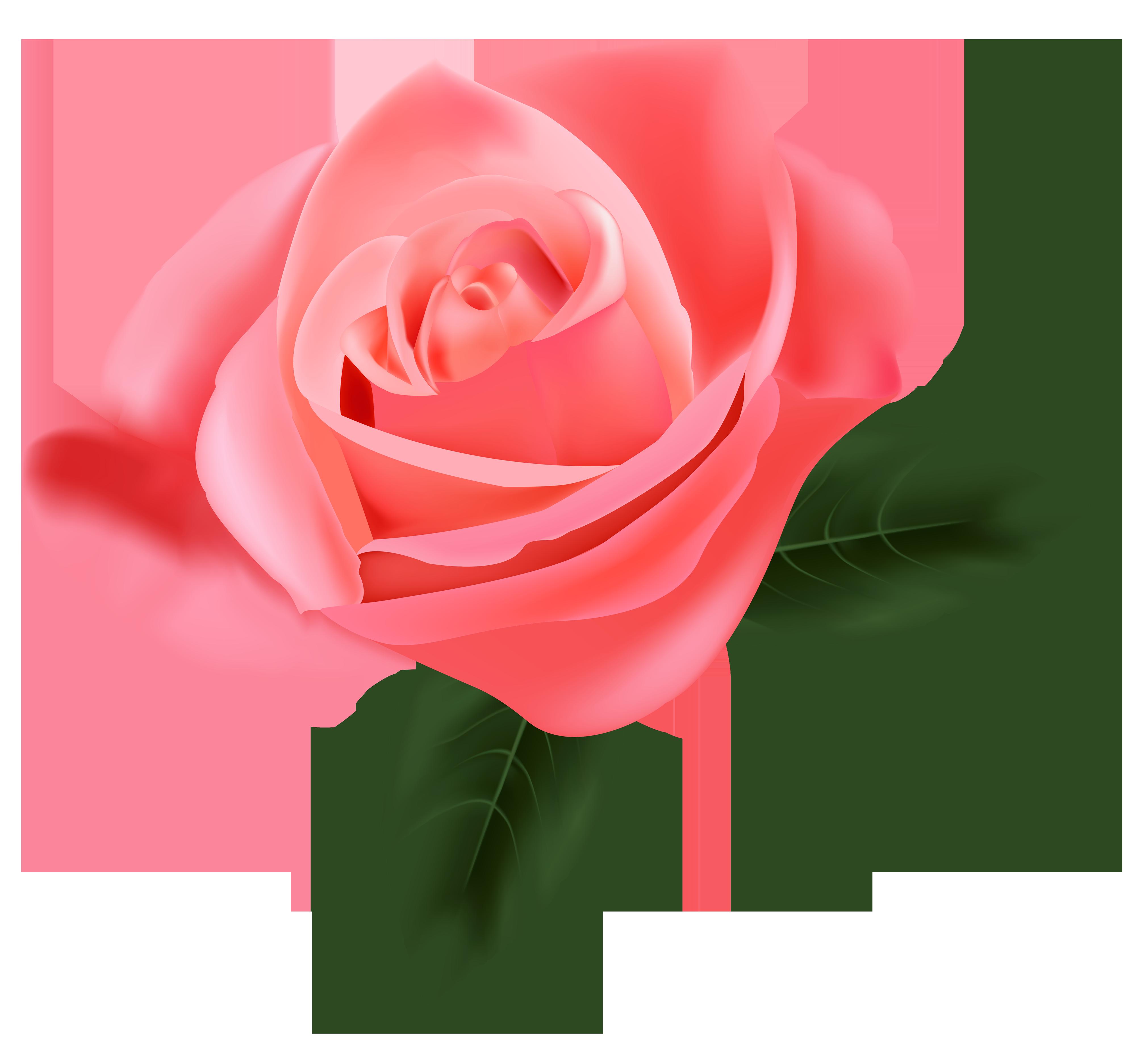 gousicteco: Light Pink Rose Clip Art Images.