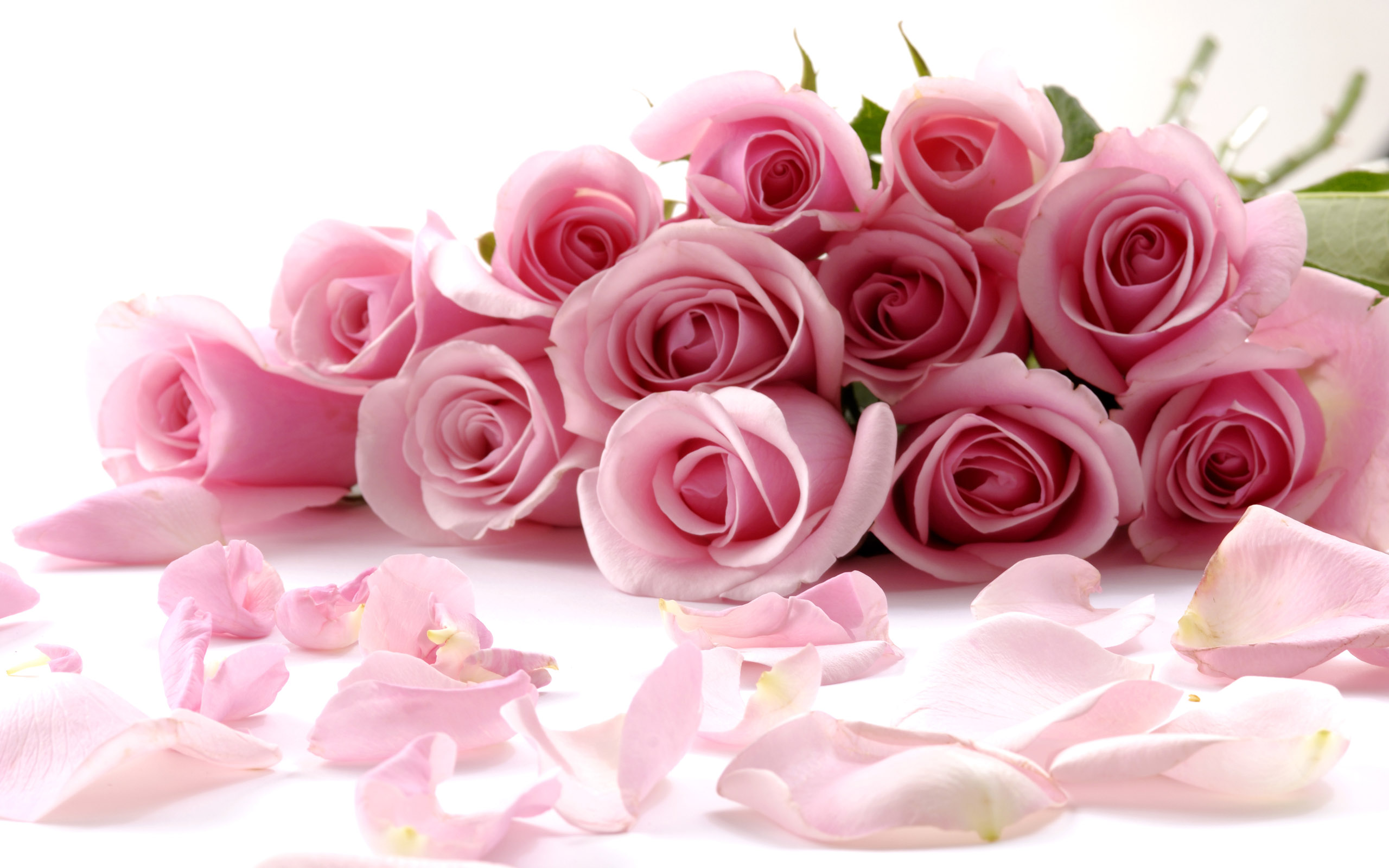 Image result for Pink Rose