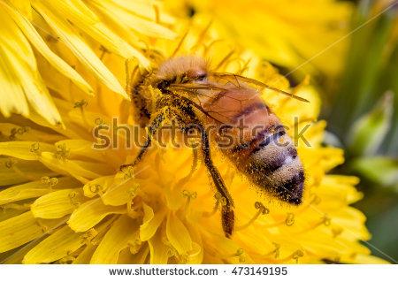 Pollen Sac Stock Photos, Royalty.