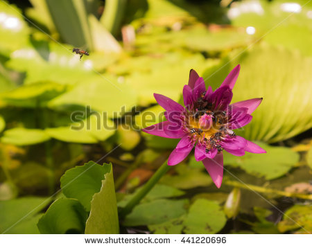 Flying Aquatic Insects Stock Photos, Royalty.