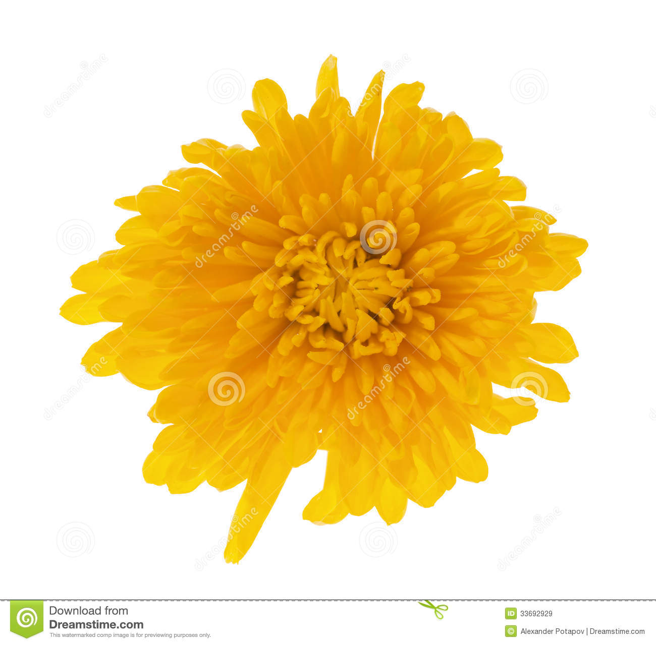 Single Deep Yellow Color Flower Royalty Free Stock Images.