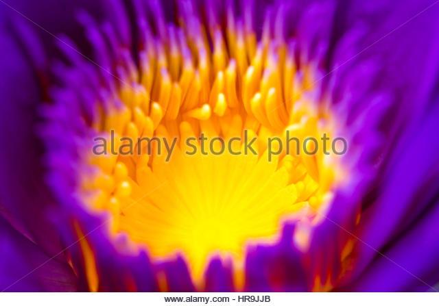 Pollen Grain Stock Photos & Pollen Grain Stock Images.