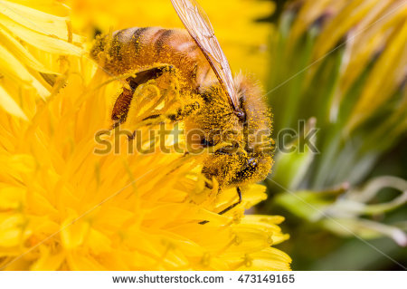Pollen Sac Stock Photos, Royalty.