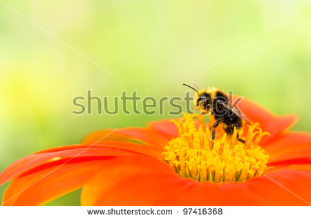 Orange Flower Bee Insect Stock Photos, Royalty.