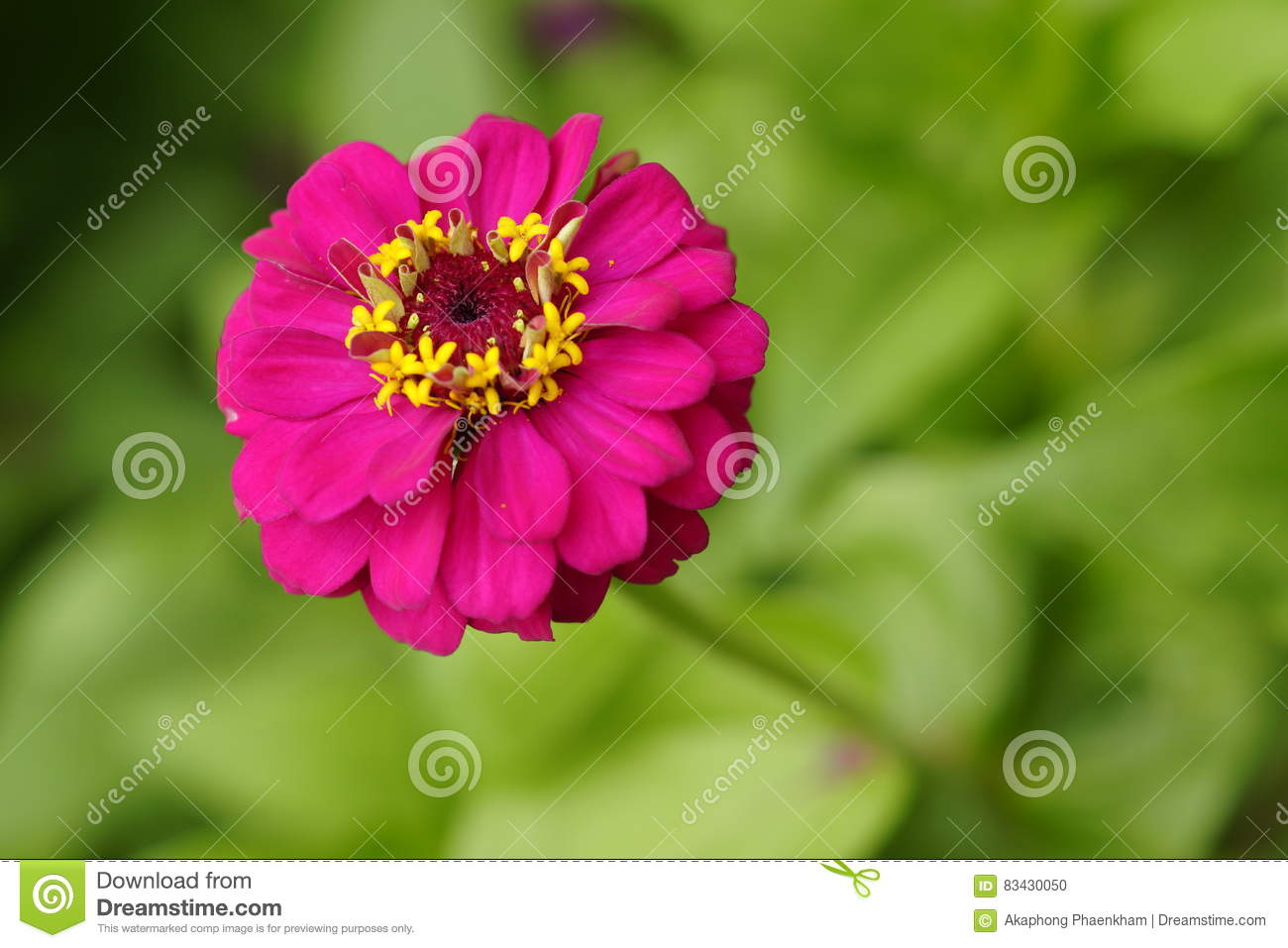 Deep Pink Flower Stock Photo.