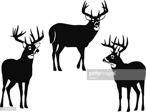60 Top White Tailed Deer Stock Illustrations, Clip art, Cartoons.